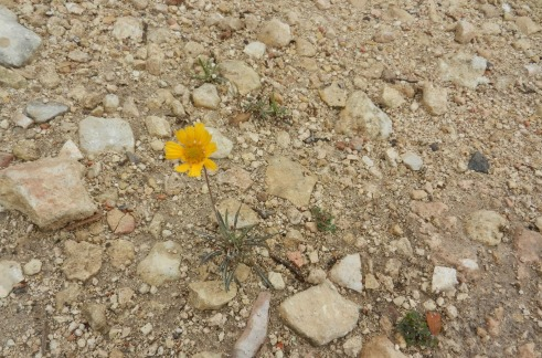 rocky soil