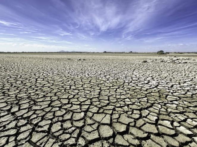 dried field