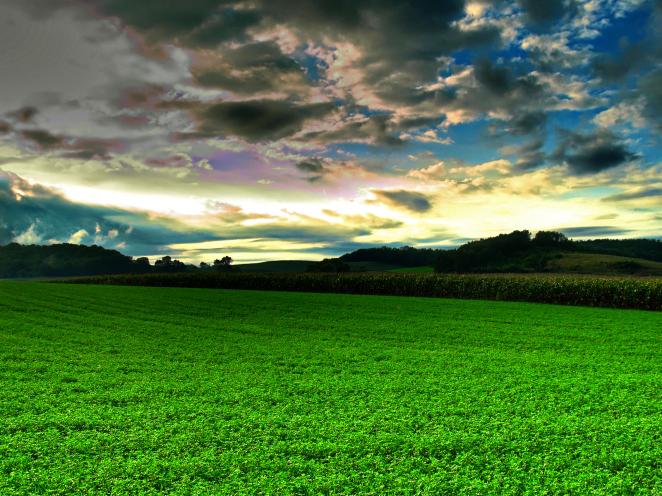 lush farm.png